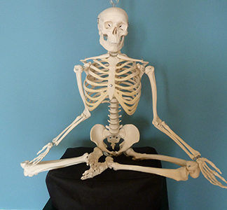 Our model skeleton, Bonaparte, is ready to teach you all he knows about Alexander Technique!